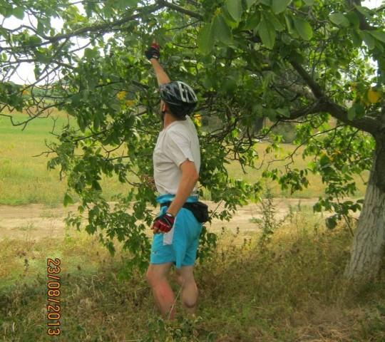 ... а в это время Сергей нашел спелые орехи