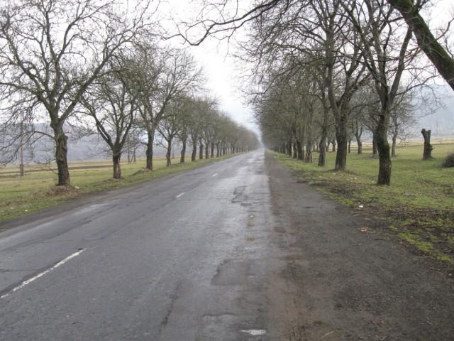 в літку дуже класно їхати на велосипеді в тіньку який роблять ці дерева