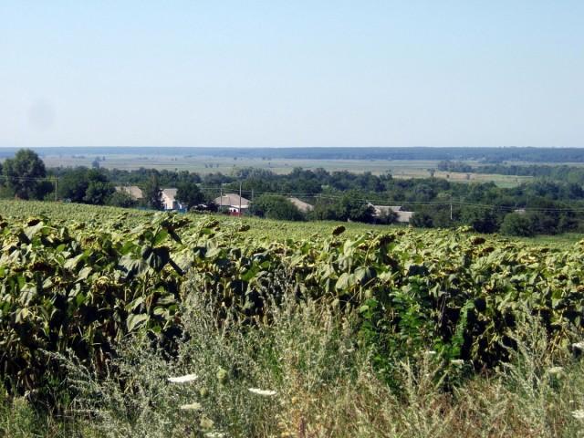 Вид з гори на Новоселицю
