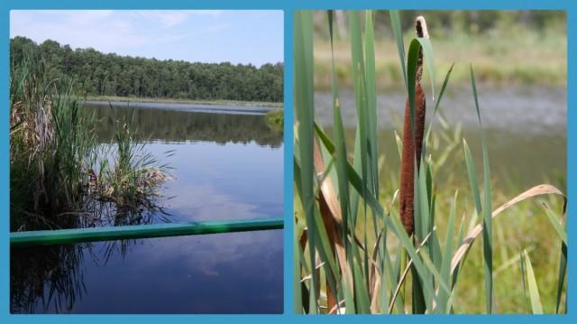 Озеро  Нечимне