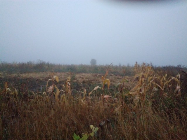 туман зранку, до старта ще година