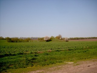 Курган и цветущие абрикосы
